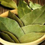Лавровый лист – советы по лечению, приготовлению пищи, для волос.