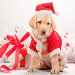 Что одеть на Новый год 2018 год желтой собаки