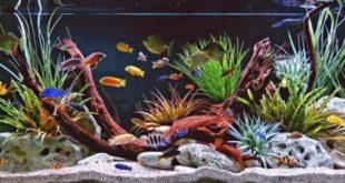 Украшение аквариума