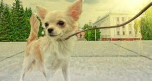 ошейник, поводок для собаки