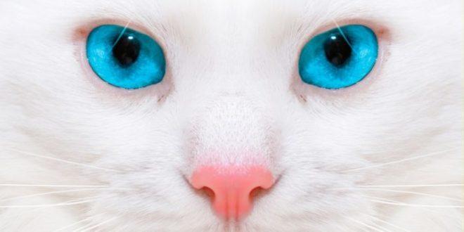 Кошки с красивыми глазами