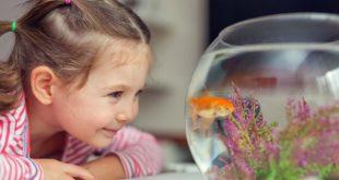 Причины, почему ребенку из животных, сначала лучше покупать рыбок